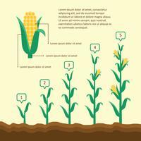 Cresça a ilustração do milho vetor