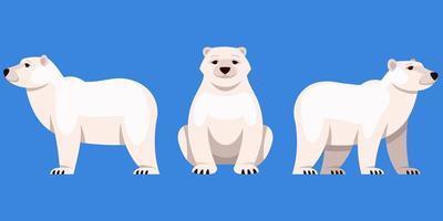 urso polar em diferentes ângulos vetor