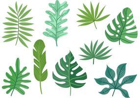 Vetores de folhas de palmeira