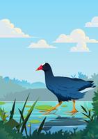 galinha do pântano