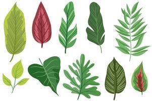 folhas exóticas grátis 2 vetores