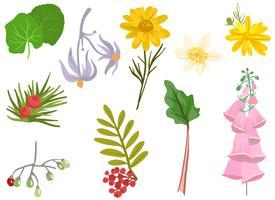 Vetores de plantas medicinais