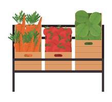 cenouras, tomates e alfaces dentro de caixas vetor
