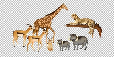 grupo de animal selvagem africano em fundo transparente vetor