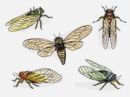 Cicada, mão, desenhado, vetorial, Ilustração vetor