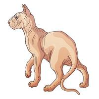 personagem de desenho animado gato esfinge