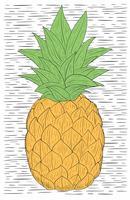 ilustração desenhada mão do abacaxi vetor