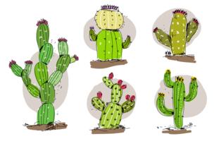 Ilustração desenhada mão do vetor do Succulents