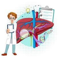 médico e fígado em fundo branco vetor