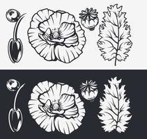conjunto de ilustrações botânicas. flores de papoula.
