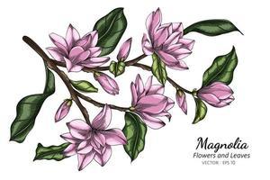 mão desenhada flores de magnólia rosa e linha arte de folhas vetor