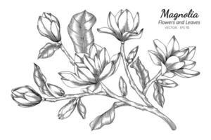 flor de magnólia desenhada à mão e folhas