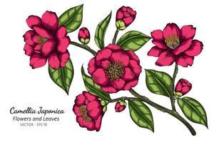 mão desenhada camélia rosa japonica flor vetor