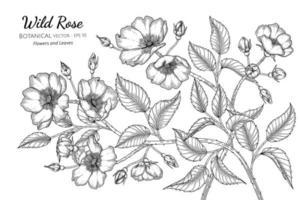 desenho à mão com flores e folhas de rosas selvagens vetor