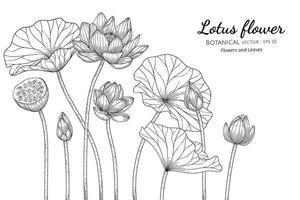 flor de lótus desenhada à mão e folhas vetor