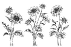 elementos desenhados à mão de girassol vetor
