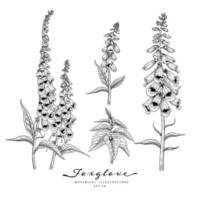 Elementos desenhados a mão de flores de dedaleira vetor