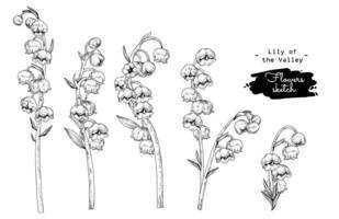 Elementos desenhados à mão de flor de lírio do vale