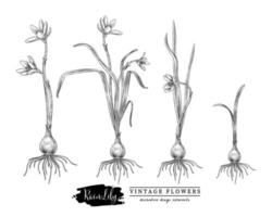 elementos desenhados à mão de flor de lírio da chuva vetor