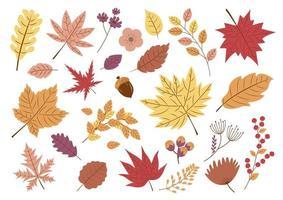 conjunto de folhas de outono vetor