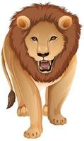 frente do leão adulto em pé no fundo branco vetor
