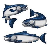 conjunto de peixe salmão azul vetor