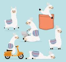 coleção de personagens de desenhos animados de lhama e alpaca vetor
