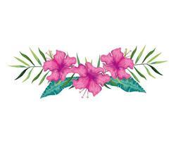 flores de hibisco cor roxa com ramos e folhas, natureza tropical, botânica primavera verão vetor