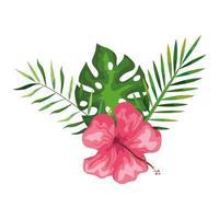 hibisco bela cor rosa com ramos e folhas, natureza tropical, botânica primavera verão vetor