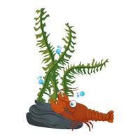 vida subaquática do mar, lagosta com algas no fundo branco vetor