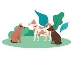 cães fofos animais de estimação ao ar livre, em fundo branco vetor