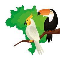 mapa do brasil com ícone isolado de papagaio e tucano vetor