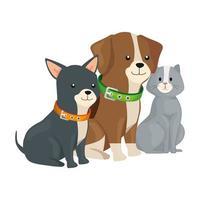 ícone de animais isolados de gatos e cachorros fofos vetor