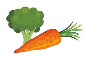 cenoura fresca com vegetais de brócolis vetor