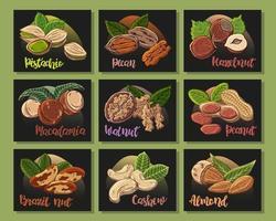 Ilustrações coloridas sobre o tema nutrição conjunto de diferentes tipos de nozes. adesivos para seu projeto. vetor