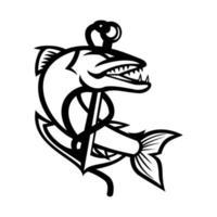 barracuda enrolando-se com corda e âncora de garra do mar