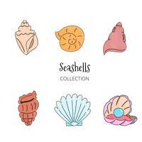 Coleção Seashells