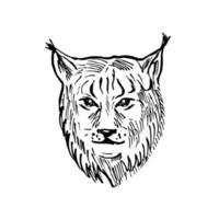 cabeça de um lince eurasian vista frontal estilo scratchboard preto e branco
