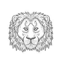 cabeça de um covarde e um leão assustado vista frontal desenho preto e branco