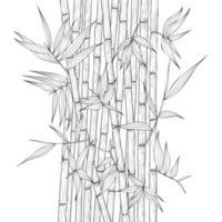 mão desenhada ilustração de bambu. vetor