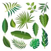 conjunto de folha e folhagem tropical vetor