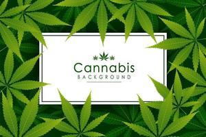 fundo de erva de folha de cannabis verde vetor