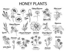 Conjunto de desenhos de mel plantas flores em tinta preta vetor
