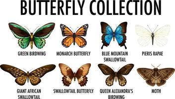 conjunto de coleção diferente de borboletas vetor