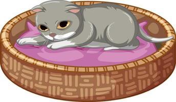 gatinho cinza deitado em sua cama no fundo branco