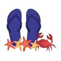 chinelos de verão e caranguejo com estrela do mar vetor