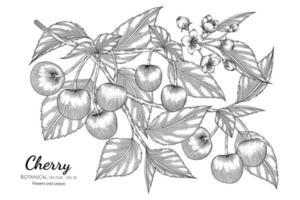 cereja fruta desenhada à mão ilustração botânica com arte em fundo branco