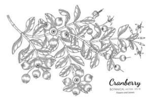 Ilustração botânica desenhada à mão com cranberry fruit com arte em fundo branco