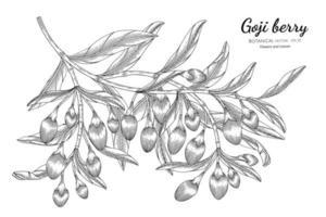 Goji berry fruit desenhado à mão ilustração botânica com arte de linha no fundo branco