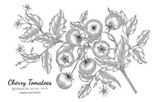 tomate cereja desenhado à mão ilustração botânica com arte em fundo branco